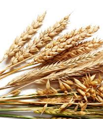 Can Wheat Really Be Bad for Your Health?  A Closer Look at Gluten